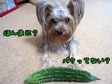 6_20090705144003.jpg