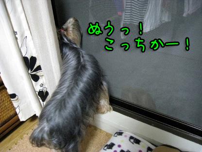 6_20090718205810.jpg