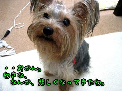 6_20090726125742.jpg