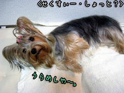 6_20090730173926.jpg
