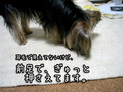 6_20090803151825.jpg