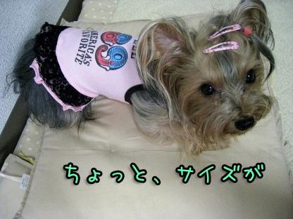 6_20090807144216.jpg