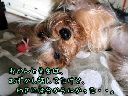 6_20090821161610.jpg
