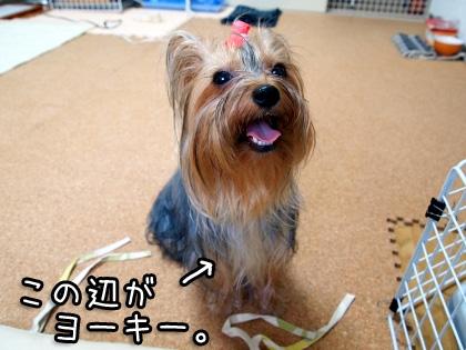 6_20090822194609.jpg