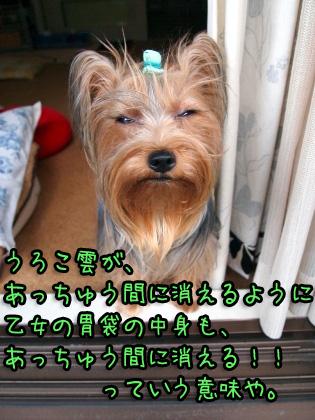 6_20090911194701.jpg