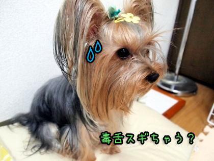 6_20090930180532.jpg