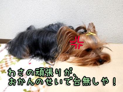 6_20091002202011.jpg