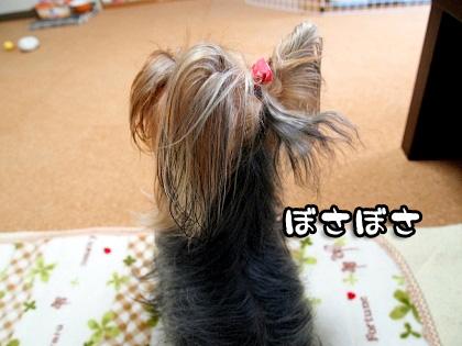 6_20091011160328.jpg
