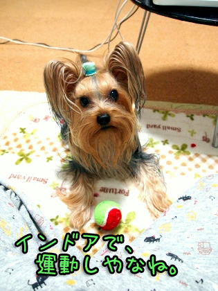 6_20091102181546.jpg