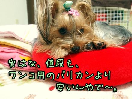 6_20091111190330.jpg