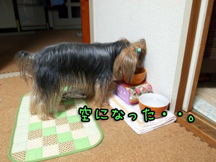 6_20091112190441.jpg