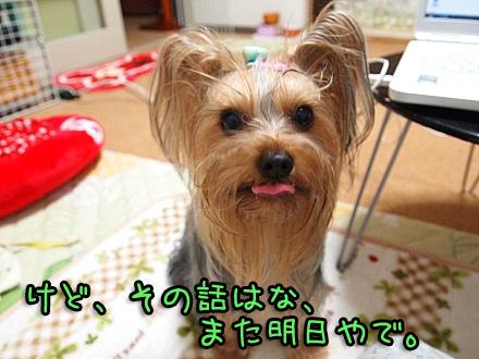 6_20091113201609.jpg