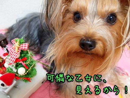 6_20091122163757.jpg
