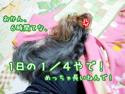 6_20091204185659.jpg