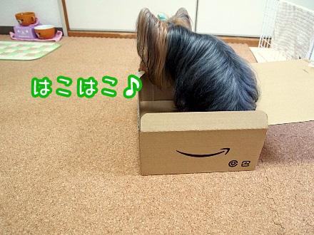 6_20091212193426.jpg