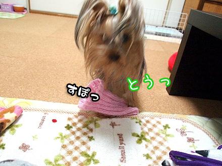 6_20091214174336.jpg