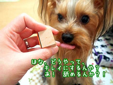 6_20091216194844.jpg