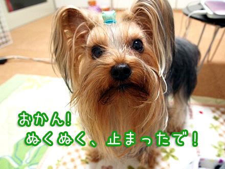 6_20091219192313.jpg