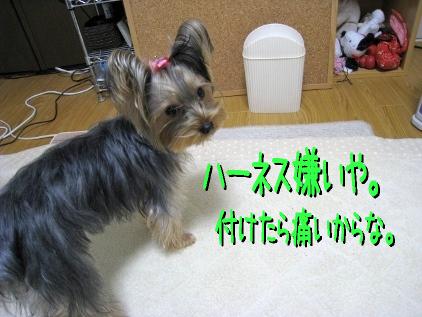 7_20090116214037.jpg