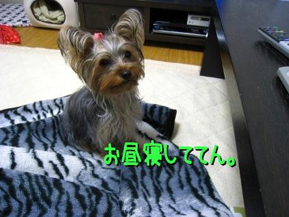 7_20090119205210.jpg