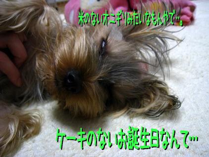 7_20090121124923.jpg
