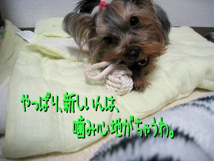 7_20090122201145.jpg