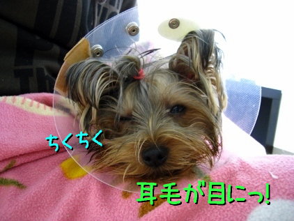 7_20090124191804.jpg
