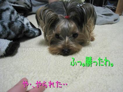 7_20090131194839.jpg