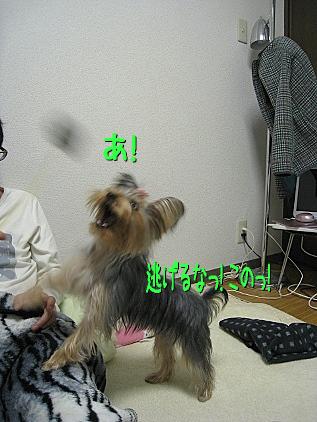 7_20090205153213.jpg