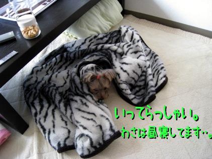 7_20090215163504.jpg