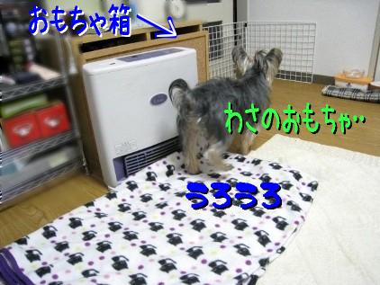 7_20090225132934.jpg