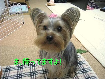 7_20090302202550.jpg