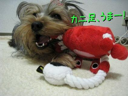 7_20090305183147.jpg