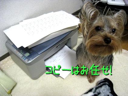 7_20090309183426.jpg