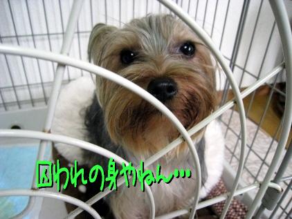 7_20090319182853.jpg