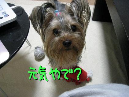 7_20090420183455.jpg