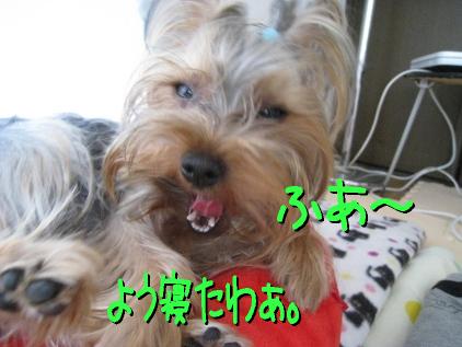 7_20090425195337.jpg