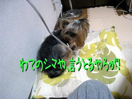 7_20090426143100.jpg