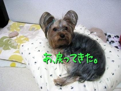 7_20090503181745.jpg