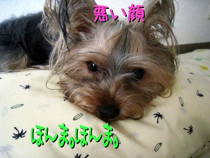 7_20090511160138.jpg