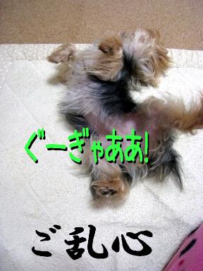 7_20090520173358.jpg