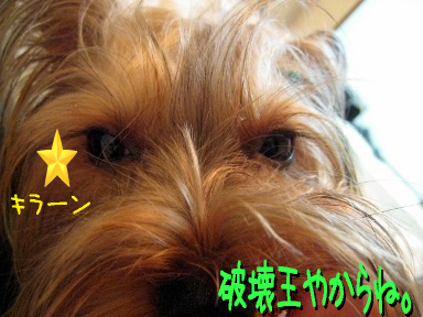 7_20090525185947.jpg