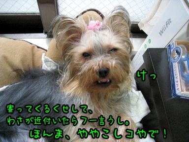7_20090610160803.jpg