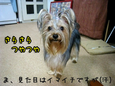 7_20090612172218.jpg