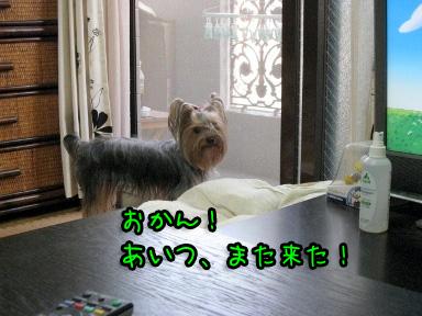 7_20090615185036.jpg