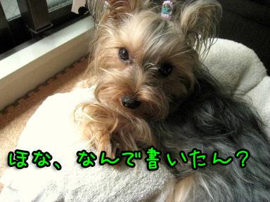 7_20090619192534.jpg