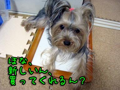 7_20090623194302.jpg