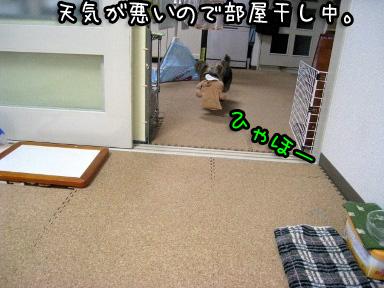7_20090701170354.jpg