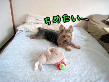 7_20090702194724.jpg