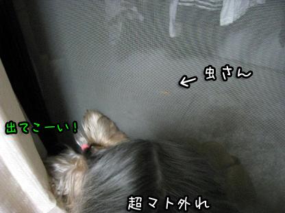 7_20090718205831.jpg